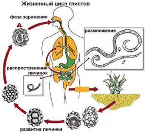 признаки аскаридоза у взрослого
