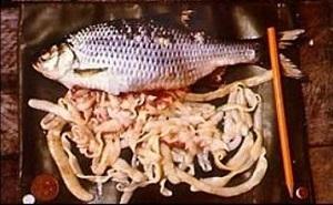 фото рыбный солитер червь в рыбе