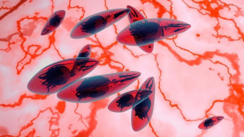можно ли заразиться от собаки токсоплазмозом