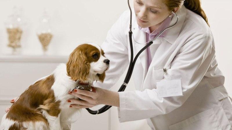 лечение токсоплазмоз у собак