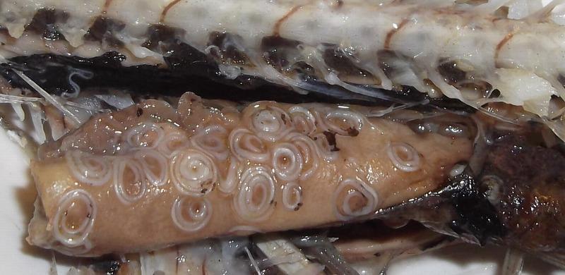 погибают ли паразиты в рыбе при заморозке