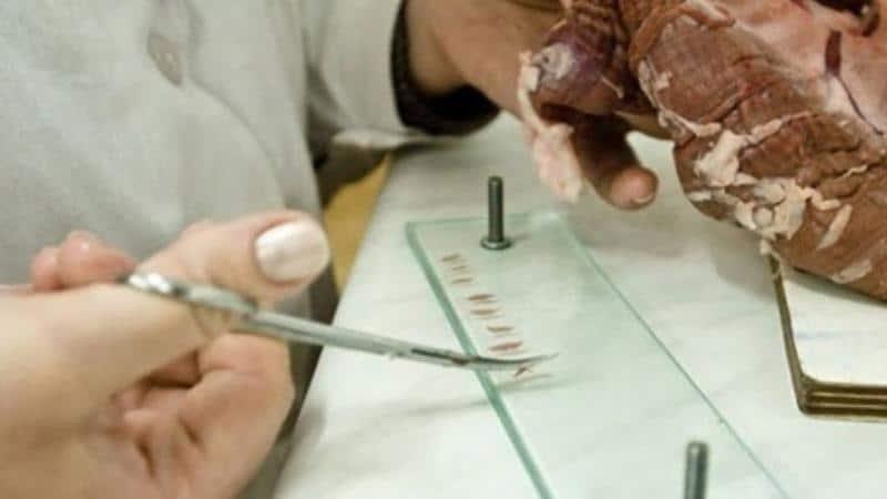 прибор для проверки мяса на трихинеллез цена