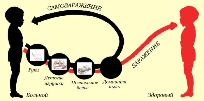 пути заражения острицами (энтеробиозом)