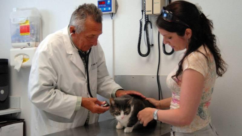 токсоплазмоз у кошки симптомы
