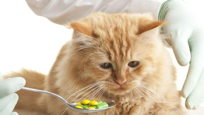 токсоплазмоз у кошек симптомы