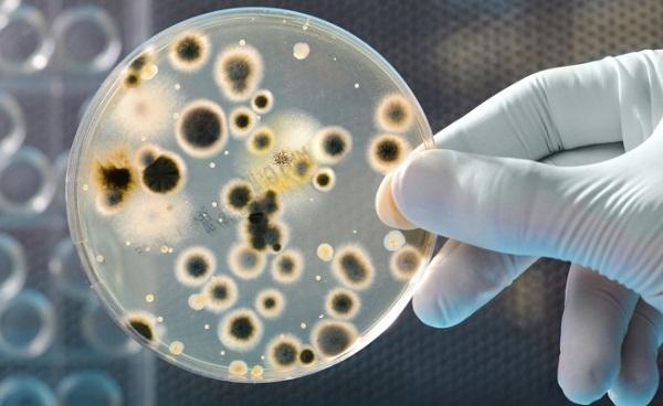 азитромицином лечение уреаплазмы