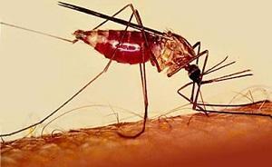что за болезнь малярия