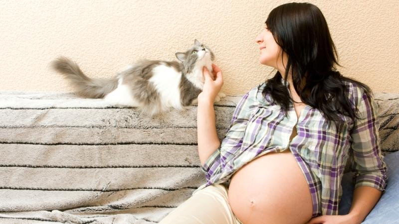 как сдавать анализ на токсоплазмоз при беременности