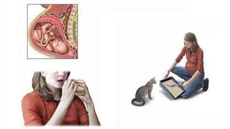 Токсоплазмоз во время беременности: не так страшен, как его