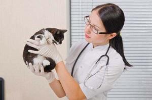лямблиоз у кошек лечение