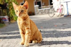 лямблоз у кошек симптомы