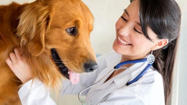 лямблиоз у собак лечение