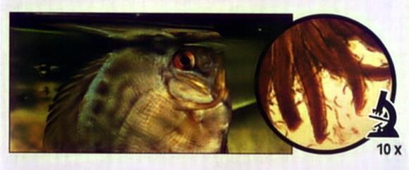 паразиты морских рыб