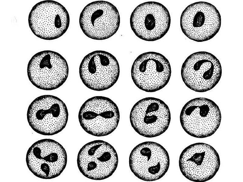Что такое пироплазмоз?