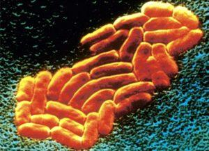 klebsiella pneumoniae в кале