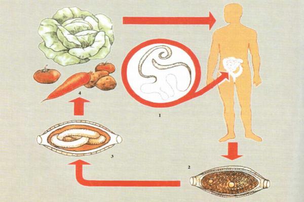 лечение трихоцефалеза у детей