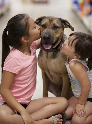 стафилококк признаки заболевания у собак