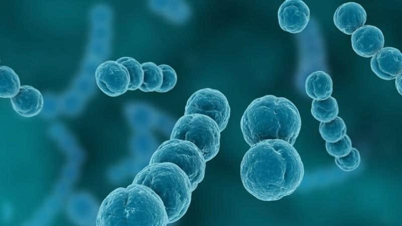 - стрептококк агалактия в мазке лечение