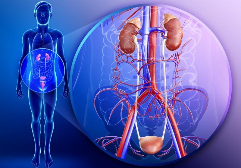 Стрептокок агалактія у мазку: лікування, що це таке в сечі » журнал здоров'я iHealth 1