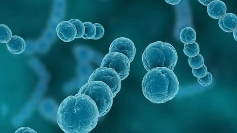 стрептококк при беременности