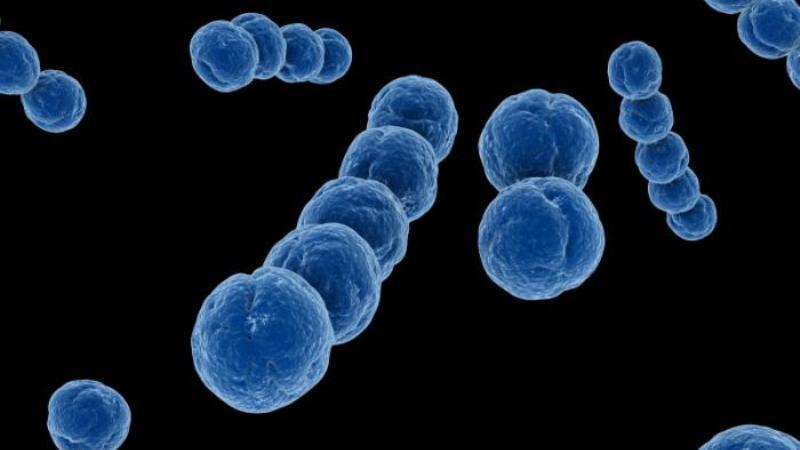 стрептококк в моче при беременности
