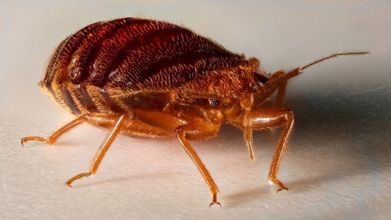 как вывести паразитов из организма дома