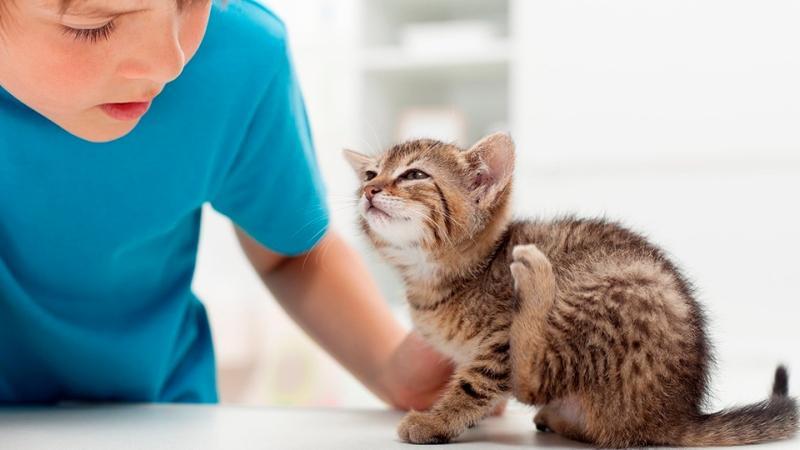 чесотка от кошки к человеку