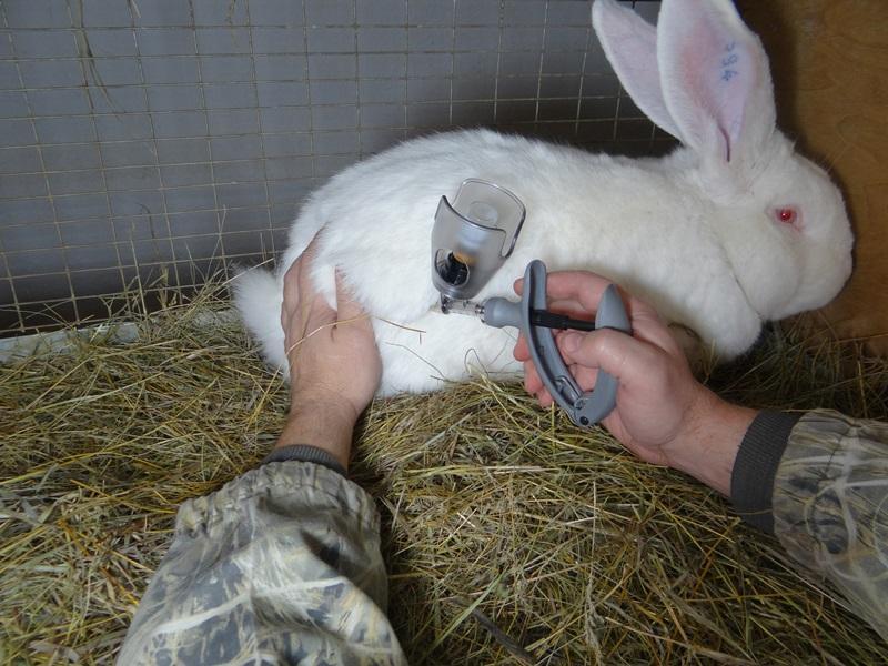 профилактика кокцидиоза у кроликов
