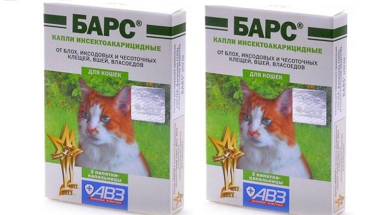 Как лечить кошку от чесотки в домашних условиях