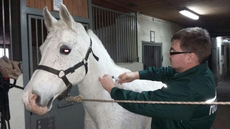 вакцина против лептоспироза лошадей