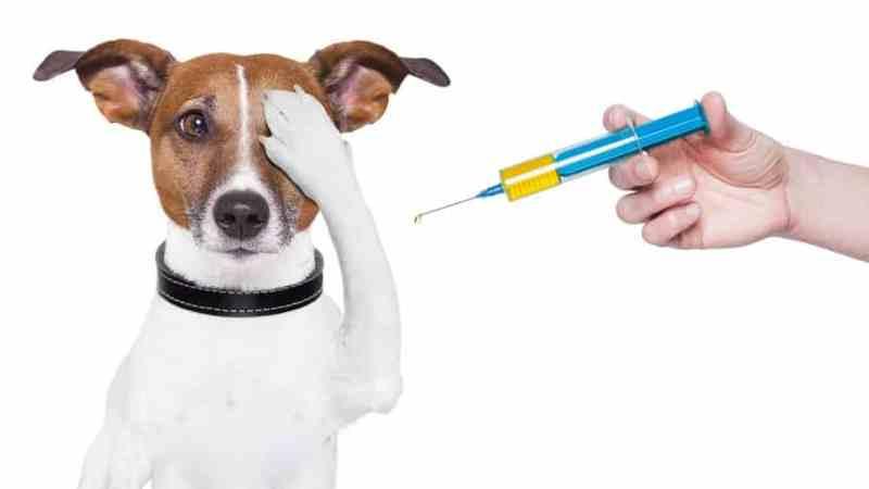 что такое лептоспироз у собак