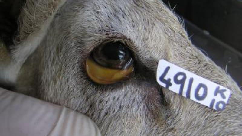 инструкция о мероприятиях по профилактике и оздоровлению животных от лептоспироза
